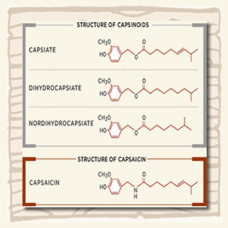 Capsinoids chemical chart