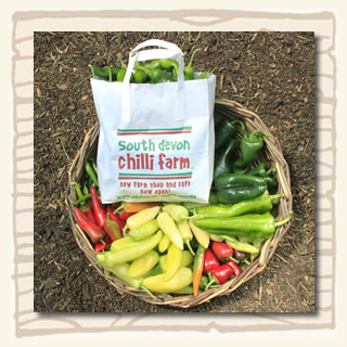 A basket of freshly picked chillies