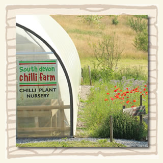 South Devon Chilli Farm Plant Nursery mid-summer
