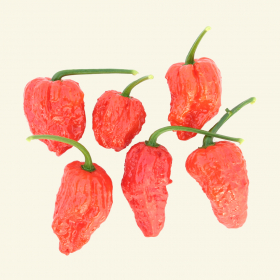 Bhut Jolokia chillies