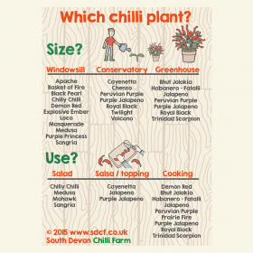 Chilli plants available online and from the South Devon Chilli Farm nursery