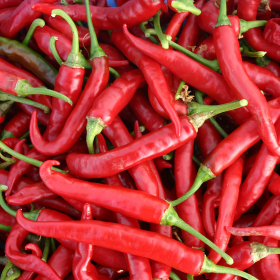 An abundance of Ring of Fire chillies
