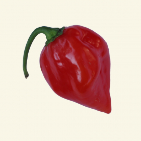Red Habanero chilli seeds