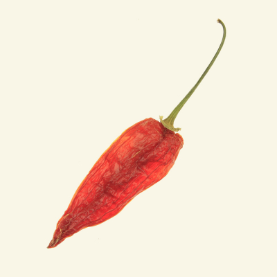 Dried Aji Red chilli - back-lite