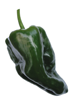 Ancho Poblano Chilli Seeds